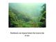 The Rainforest PPT