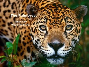 The Rainforest Power Point