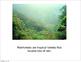 The Rainforest eBook (PDF)