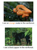 The Rainforest is Colorful adapted book