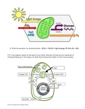 Photosynthesis Reading and Coloring by Biology Roots | TpT