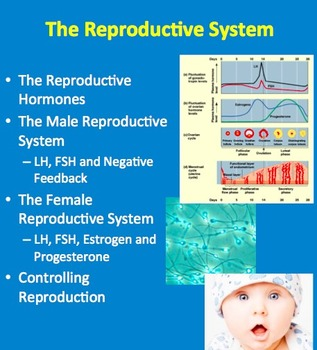 The Reproductive System - A Senior Biology Lesson Package