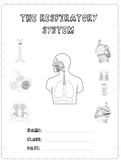 The Respiratory System - A Research Project