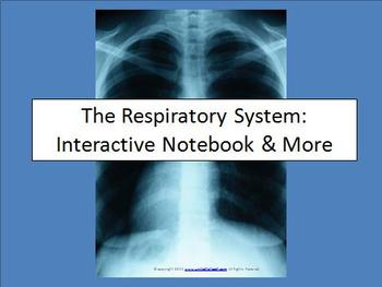 The Respiratory System: Interactive Notebook and More