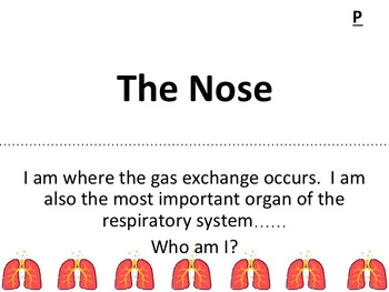 The Respiratory System Scavenger Hunt