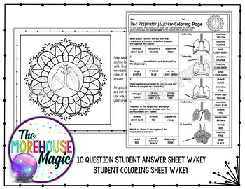 The Respiratory System Science Color By Number or Quiz
