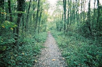 """Robert Frost """"The Road Not Taken"""" -- Clipped Classic Teaching Video CCSS Aligned"""