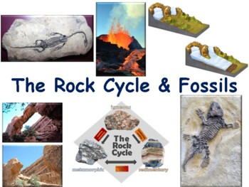The Rock Cycle and Fossils Flashcards-study guide, state exam prep