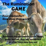 The Rumination Game