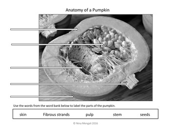 The SCIENCE OF PUMPKINS!!  Hooray for Pumpkins!! Make Science Fun!!