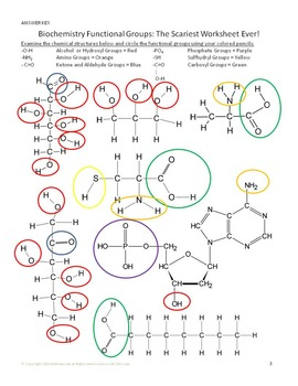 Biochemistry Functional Groups Activity for High School Biology