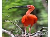 The Scarlet Ibis by James Hurst: Narrative Lesson Plans