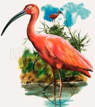 Scarlet Ibis Complete Short Story Bundle