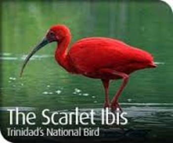 The Scarlet Ibis Complete Short Story Bundle