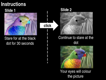 The Science of Seeing Colours Assembly/Starter
