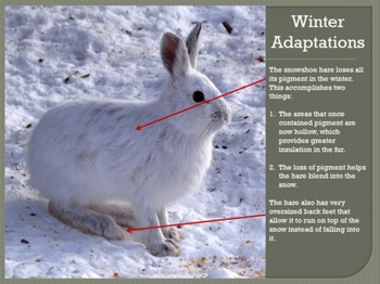 The Science of Winter:  Adaptations & Survival