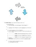 The Scientific Method Graphic Organizer