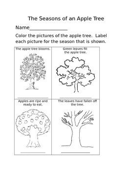 The Seasons of an Apple Tree