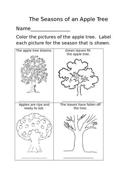 The Seasons of an Apple Tree