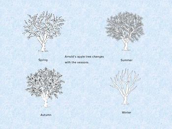 The Seasons of the Apple Tree