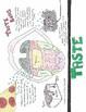 The Senses- Visual Learning