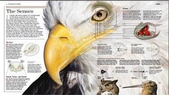 The Senses of Birds