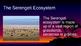 The Serengeti eBook PDF