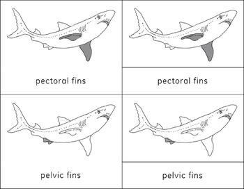 The Shark Learning Pack