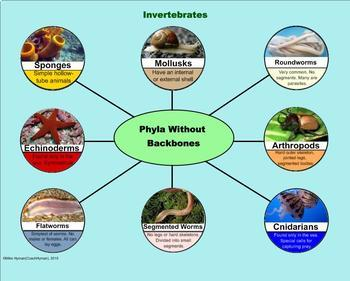 The Six Kingdoms of Organisms -  A Fifth Grade PowerPoint Introduction