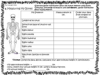 The Skeletal System - A Science Inquiry