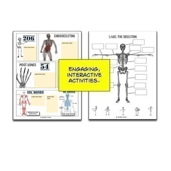 The Skeleton Google Drive Interactive Notebook