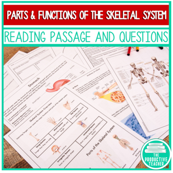 The Skeletal System: Independent Lesson