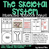 The Skeletal System Interactive Notebook Pages