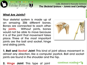 The Skeletal System - Joints and Cartilage - NOTEBOOK Gr. 3-8