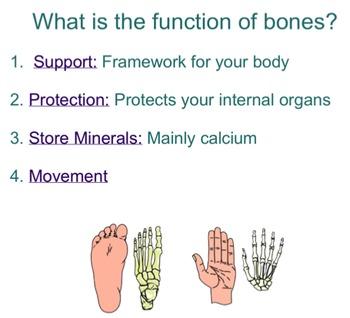 The Skeletal System SMART notebook presentation
