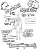 The Skeletal System Sketch Doodle Notes,Student Notes, incl FIB Version!