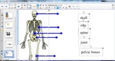 The Skeletal System for 2nd Grade Interactive