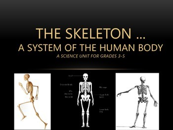 The Skeleton ... A System of the Human Body PPT