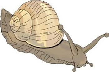 The Snail Song