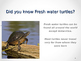 Reptiles-The Story of the Turtle
