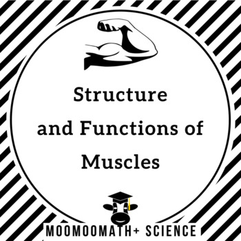 The Structure and Function of the Human Muscle