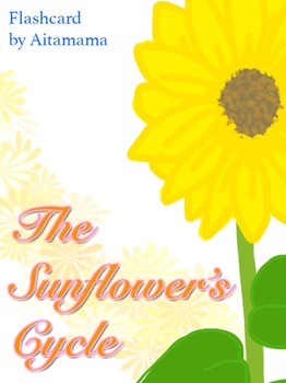 The Sunflower's Cycle flashcard