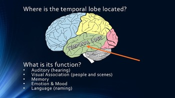 The Temporal Lobe - Brain Games (Powerpoint & 4 Games)