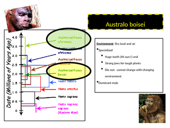 The Theory of Human Adaptation Lecture Notes PowerPoint