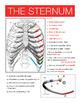 The Thoracic Skeleton w/key