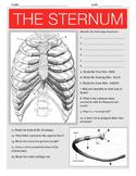 The Thoracic Skeleton w/key