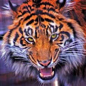 The Tiger's Heart Jim Kjelgaard Figurative Language Workshop