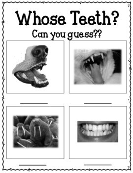 The Tooth Book. Dr. Seuss. Worksheets and Activities. Teeth