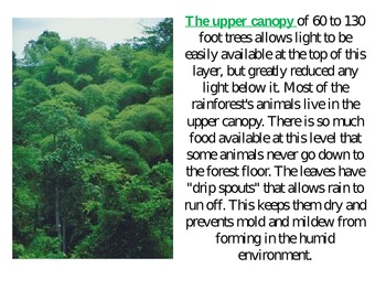 The Tropical Rainforest Biome PowerPoint Presentation