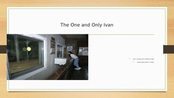 The True Story of the One and Only Ivan